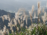 Bent-grass in Mountains