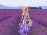 Walking in a Field of Lavenders