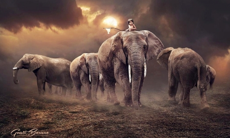 Under The Sun - herd, Elephants, ominous, anumals, brown, awesome, sky