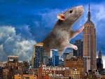 2020 ~ Year of the Rat