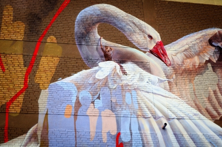 Graffiti - art, wings, bird, pasari, graffiti, lebada, swan, white, wall