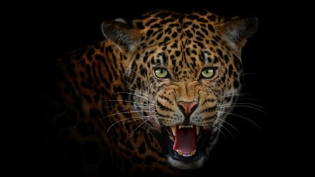 Jaguar Cats Animals Background Wallpapers On Desktop Nexus Image 2535682