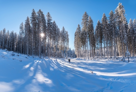 Winter scenery - shadows, nature, creation, white, pretty, conifers, sun, divine, cold, photography, UHD, blue