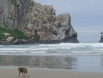 An old friend on the Beach (Morro Bay)