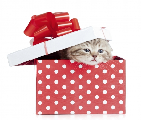:D - cat, kitten, gift, pisici, red, box, bow, valentine, animal, cute, dot, white