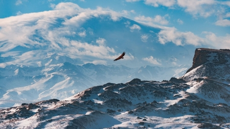Freedom - freedom, sky, mountains, snow, eagle, clouds