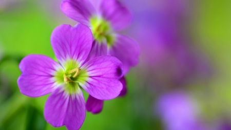 Purple Love - flower, purple, stuning, love