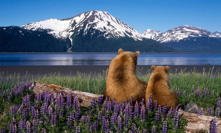 A Bears View of Nature - bears, scenery, Nature, log, lupins, Scenic, mountains, Lake, flowers, Flowers, animals