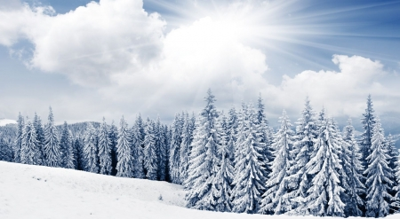 Shiny winter day - nature, landscape, scene, winter, forest, sunlight, sunny, snow, pine, mountains, wallpaper, sunshine
