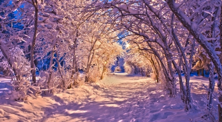 Snowy tree archway - path, way, nature, trees, landscape, scene, winter, snow, wallpaper, road