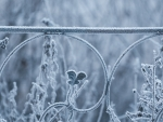 Frost on vegetation and railing