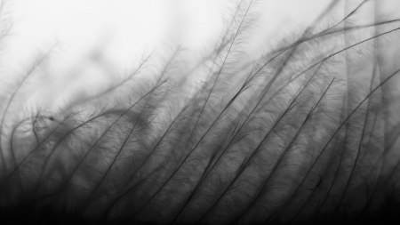 Abstract, black and white grass - black, black and white, filter, white, abstract, life, grass, plant, air, deep, movement