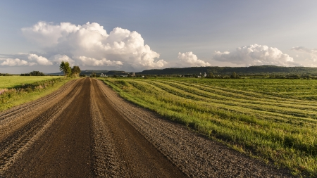 Dirt Farm Road - dirt, farms, nature, roads, grass