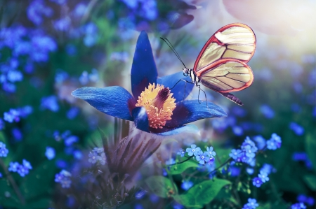Butterfly - Wings, Butterfly, Colourful, Flowers, Spring, Blue