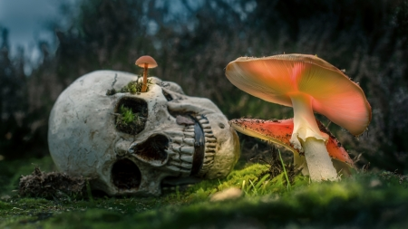 :) - bones, orange, amanita, death, life, mushroom, skull