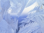 Frosted window close-up