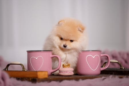 ♥ - cute, heart, cup, valentine, pink, sweet, puppy, dog, cookie