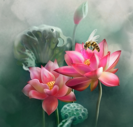Lotus - insect, flower, pink, leaf, albina, lotus, water lily, bee, vara, green, harekrushna ojha, summer