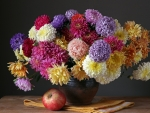 Asters and Apple