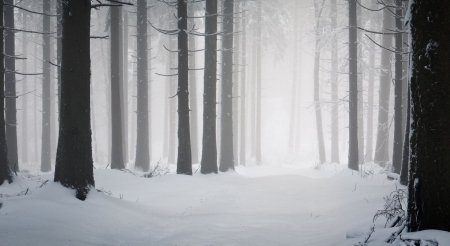 Dark winter forest - landscape, scene, winter, fog, mist, forest, foggy, wallpaper, nature, misty, wood