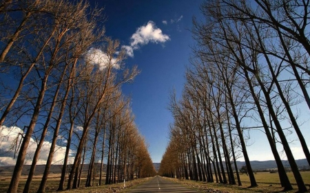 Tree Alley - avenue, road, trees, alley