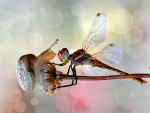 Snail and dragonfly
