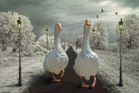 :) - giant, lamp, gees, lantern, gaste, goose, iarna, winter, fantasy, bird, pasari, white, couple, street