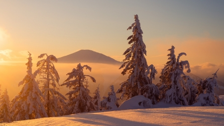 Winter Solitude - snow, trees, Winter, mountain, sunshine, fog