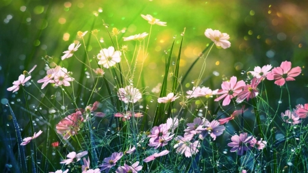 Springtime - flowers, Spring, Summer, raindrops, sunshine