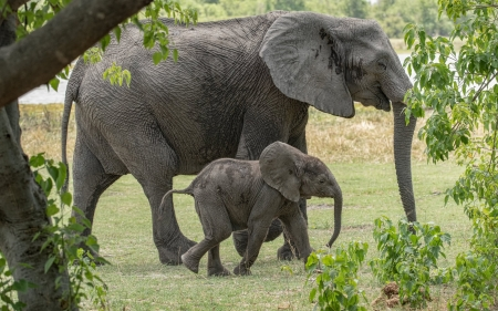 Mom and Baby Passing By - elephants, baby, animals, mom, large