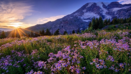 Spring meadow - sun, rays, wildflowers, summer, sunset, spring, morning, beautiful, mountain, sunrise