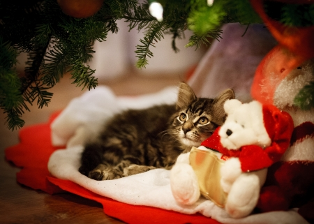 Christmas kitten - craciun, toy, cat, kitten, teddy bear, animal, red, christmas, cute, pisici