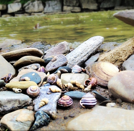 Still - lovers, loneliness, river, nature, lonely walk, Rocks, shells