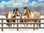 Horses in Winter Corral