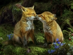 Foxlings In The Woods
