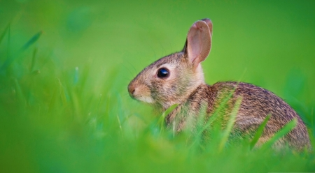 Baby hare - wildlife, spring, bunny, hare, animals, wild animals, abstract, cute, photography, wild, wallpaper