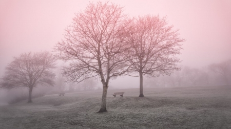 Beginning of spring - landscape, scene, field, foggy, park, spring, trees, fog, mist, wallpaper, nature, misty