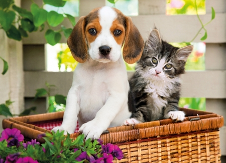 ♥ - kitten, cat, pisici, puppy, couple, dog, caine, animal, pet, cute, basket