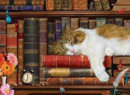 Sleeping cat - library, books, paw, painting, shelves, cat, pisici, art, sleep, pictura