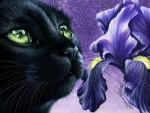 Black cat and iris
