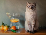Cat and Oranges