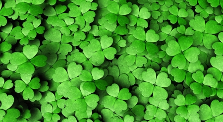 Four-leaf clover - grass, clover, green, St Patricks day, wallpaper, nature, luck