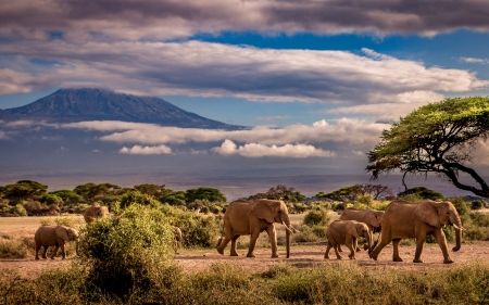 Elephants - elephants, clouds, animals, mount