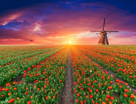 Holland windmill - road, sly, holand, colorful, windmill, Netherlands, canal, dutch, sunset, beautiful, Rotherdam, tulips, field