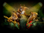 Squirrel Band