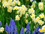 Cheerful Yellow & Violet Blue
