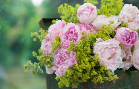 Box of Peonies - box, Pink, bouquet, peonies