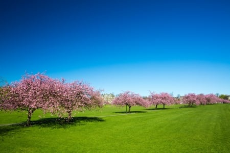 Orchard - farming, HD, trees, agricultural, photography, blossoming, green, fields, nature, orchard, pink, huge