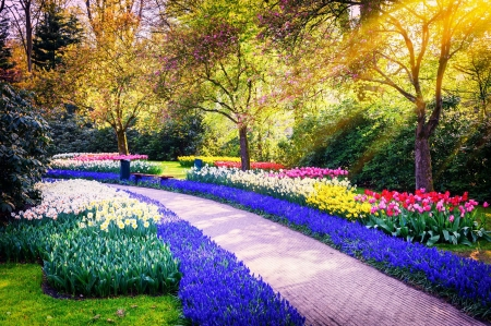 Spring in Holland - alley, freshness, Netherland, grass, Keukenhof, park, spring, beautiful, rays, Holland, flowers, tulips