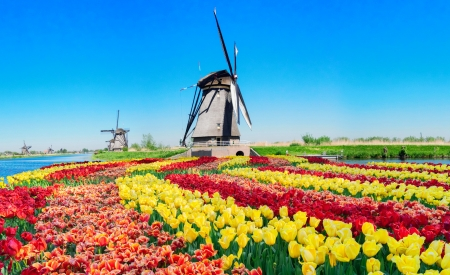 Dutch windmill - colorful, windmill, Holland, dutch, tulips, spring, sky, Netherland, flowers